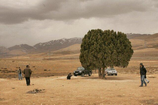 اما و اگرهای نصب مجسمه یک کارگردان ، تک درخت معروف کیارستمی کجاست؟