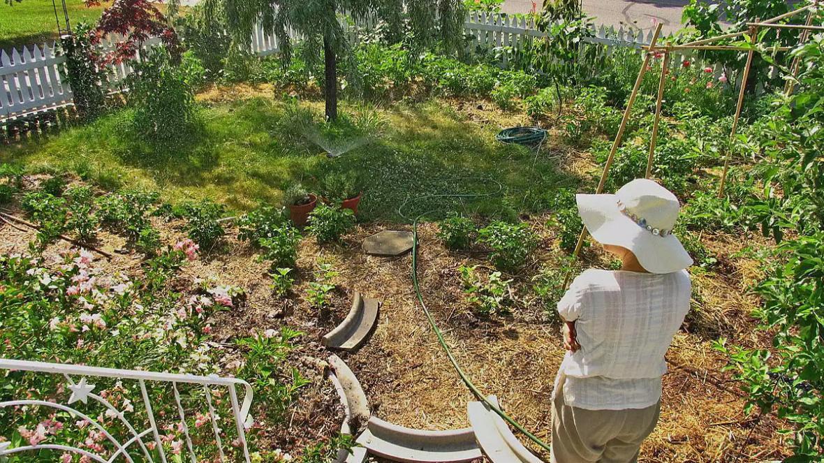 خلاقیت در باغبانی و ایجاد فضایی متفاوت در حیاط و محوطه سازی