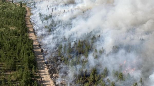 آتش سوزی جنگل ها باعث افزایش آلودگی شده است